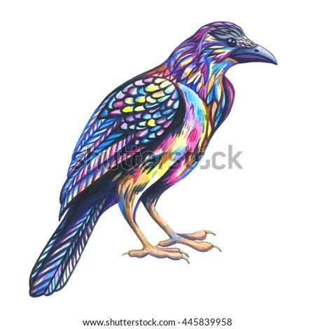 Carrion Crow  in front of a white background. Watercolor illustration. Animal illustration. Raven bird. - stock photo