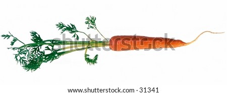 Carrot isolated on white background