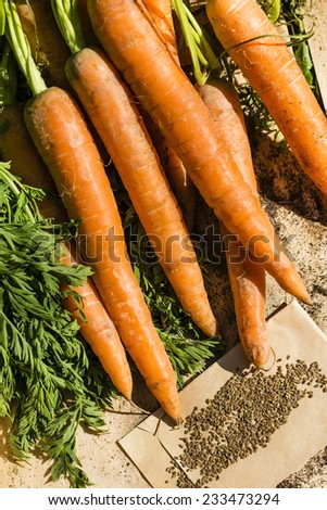 carrots and seeds - stock photo