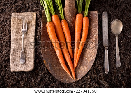 Carrots organic farm to table healthy eating concept on soil background. - stock photo