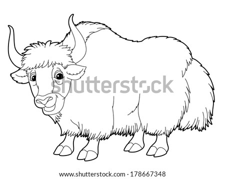 Crack Yak Drawing Cartoon Animal Yak