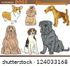 Cartoon Comic Illustration of Canine Breeds or Purebred Dogs Set - stock