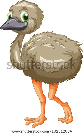 Cartoon of an emu on white - EPS VECTOR format also available in my portfolio. - stock photo