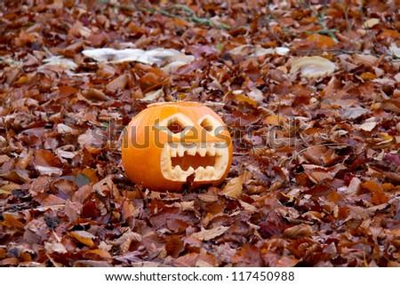 Carved Halloween pumpkin resting on fallen Beech leaves - stock photo