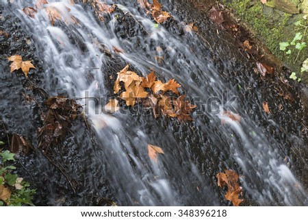 Cascade and leaves