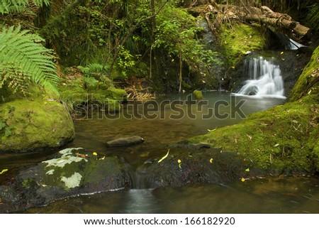 cascade in rainforest, small waterfall in lush moss and lichen-covered temperate rainforest, Oparara-Becken, Karamea, West Coast, South Island, New Zealand,  - stock photo