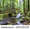 Cascades on a clear creek in a forrest - stock photo