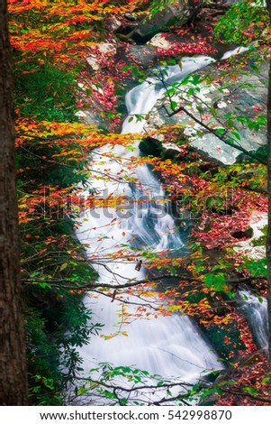 Cascading creek in the  Great Smoky Mountains National Park with autumn colors on display