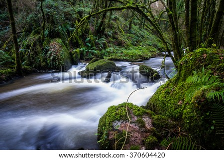 cascading stream through a lush green forest - stock photo