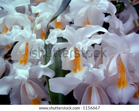 Cascading white flowers stock photo royalty free 1156667 cascading white flowers mightylinksfo