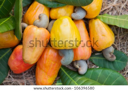 Cashew apples with leaves - stock photo