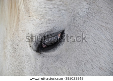 Casper's Eyelashes - stock photo