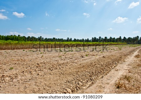 cassava cultivation in Thailand