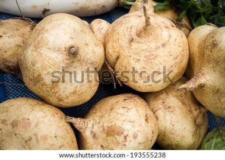 cassava, Yam bean, Pachyrhizus erosus (L.) Urbar - stock photo