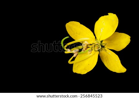 Cassia fistula golden flower stock photo royalty free 256845523 cassia fistula golden flower ccuart Image collections