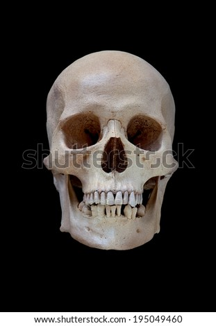 Cast of a cleaned human skull isolated on black - stock photo