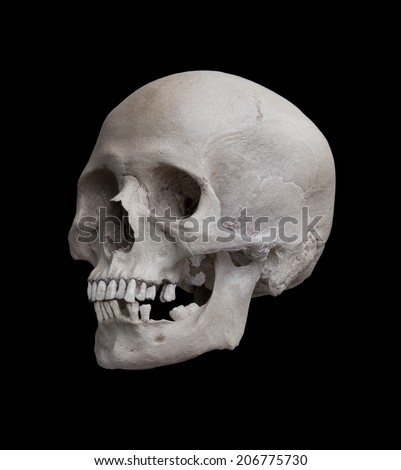 Cast of a human skull showing a left side view looking diagonally forward isolated on black.