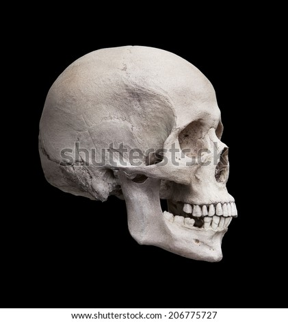 Cast of a human skull showing the right lateral view isolated on black.