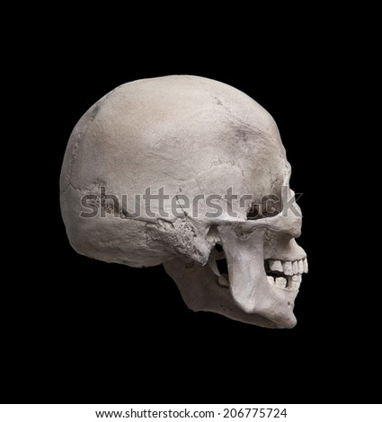Cast of the right side of a cleaned human skull looking away from the viewer isolated on black - stock photo