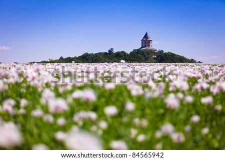 Castle Humprecht (Czech Republic) and poppy field - stock photo