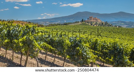 Castle Overseeing Vineyards with  Rows of grapes from a Hill on a Clear Summer Day - stock photo