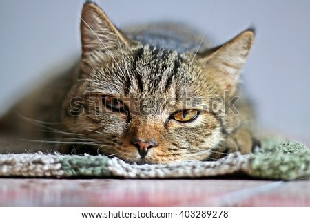cat - stock photo