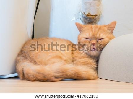 cat - stock photo
