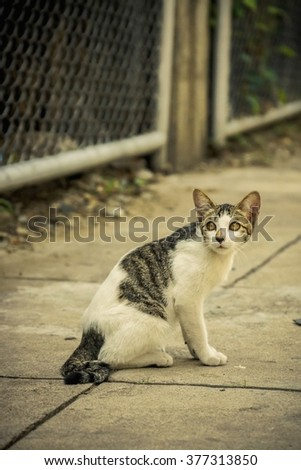 Cat alone sit on street hungry scary need hep - stock photo