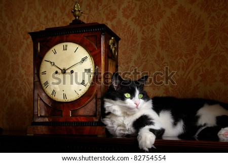Cat and antique clock