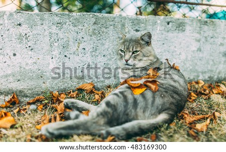 Cat and autumn leaves