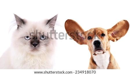 Cat and beagle dog isolated on white - stock photo