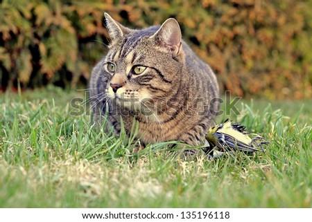 cat and bird - stock photo