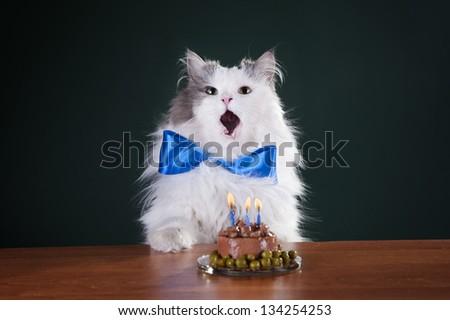 Cat Cake Stock Images RoyaltyFree Images Vectors Shutterstock