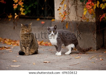 Cat and cat in the street - stock photo