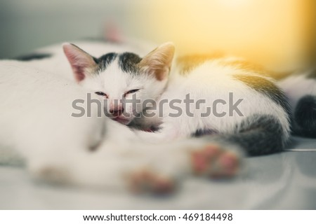 Cat and cute little tabby kittens