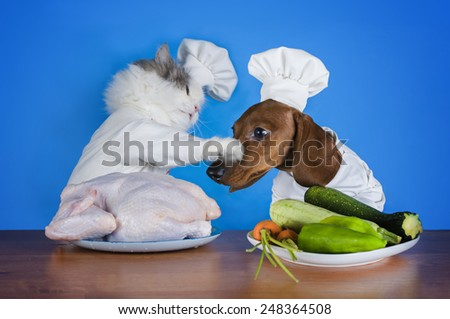 cat and dachshund going to the kitchen to cook chicken  - stock photo