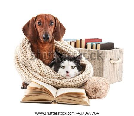 Cat and dachshund in knitted scarf with books, isolated on white. - stock photo