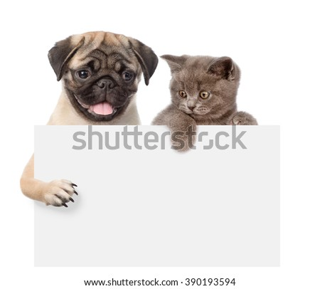 Cat and Dog above white banner. isolated on white background - stock photo