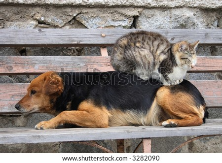 cat and dog are friend one year later