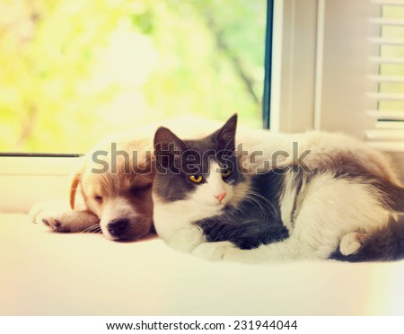 cat and dog at the window - stock photo