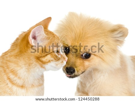 cat and dog closeup. isolated on white background - stock photo
