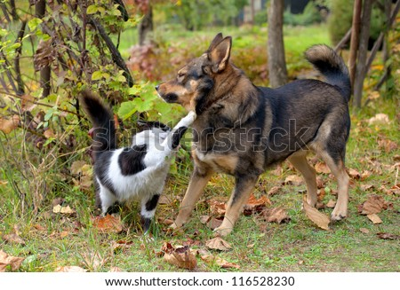 Cat and dog fighting each other - stock photo