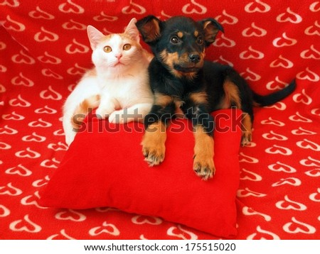 Cat and dog: friendship.Two friends in the red home. - stock photo