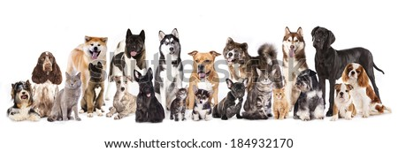 Cat and dog,Group of dogs and cats  sitting in front of a white background  - stock photo