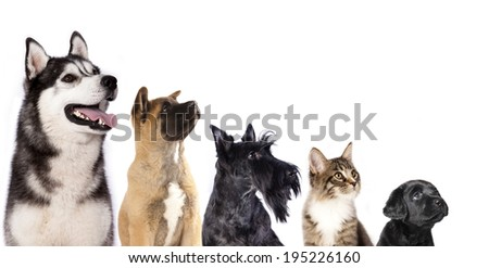 Cat and dog, group of dogs and kitten  looking up - stock photo