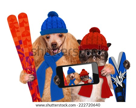 Cat and dog hats taking a selfie together with a smartphone - stock photo