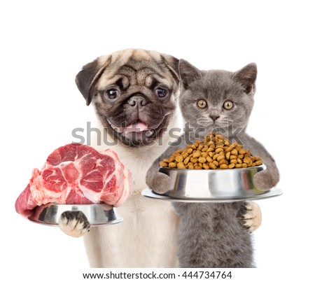 Cat and dog holding bowl of dry dog food and piece of raw meat. isolated on white background