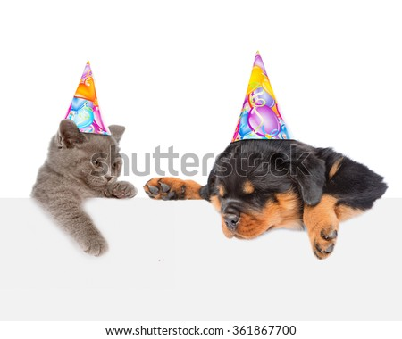 Cat and Dog in birthday hats peeking from behind empty board looking down. isolated on white background - stock photo