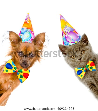 cat and dog in birthday hats with bow tie look out from behind a banner. Isolated on white background