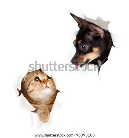 cat and dog in paper side torn hole isolated - stock photo